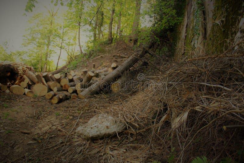 Bois de chauffage dans la forêt photographie stock libre de droits