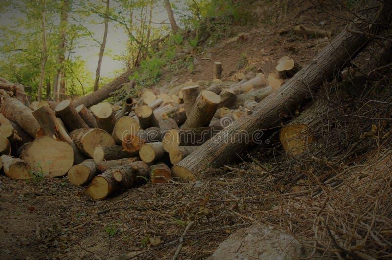 Bois de chauffage dans la forêt photo libre de droits