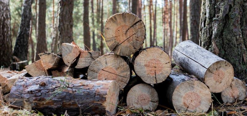 Bois de chauffage pour un feu dans la forêt Lumber photos stock
