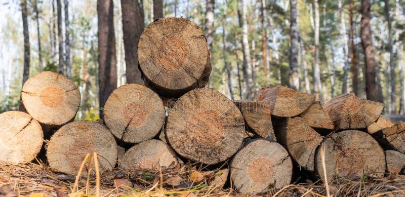 Bois de chauffage pour un feu dans la forêt Lumber photo stock
