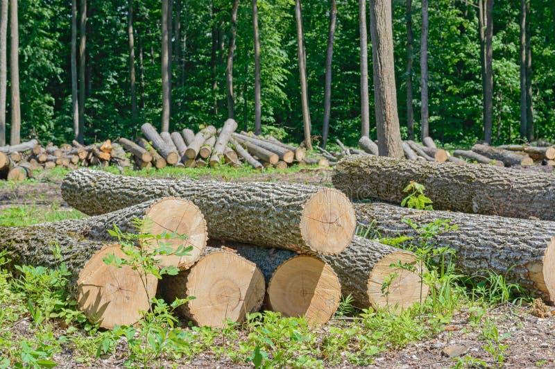 Bois de construction abattu images libres de droits