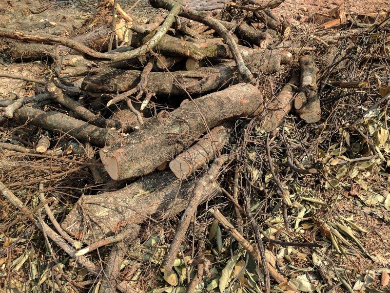 Bois de construction abattu dans la for?t photographie stock libre de droits