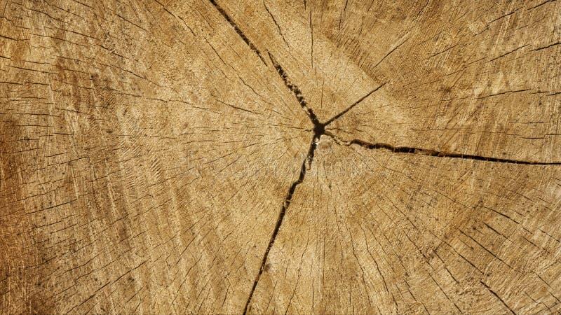 Bois de construction abattu empilé  Exploitation de sylviculture d'arbre photo libre de droits