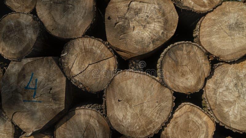Bois de construction abattu empilé  Exploitation de sylviculture d'arbre photographie stock