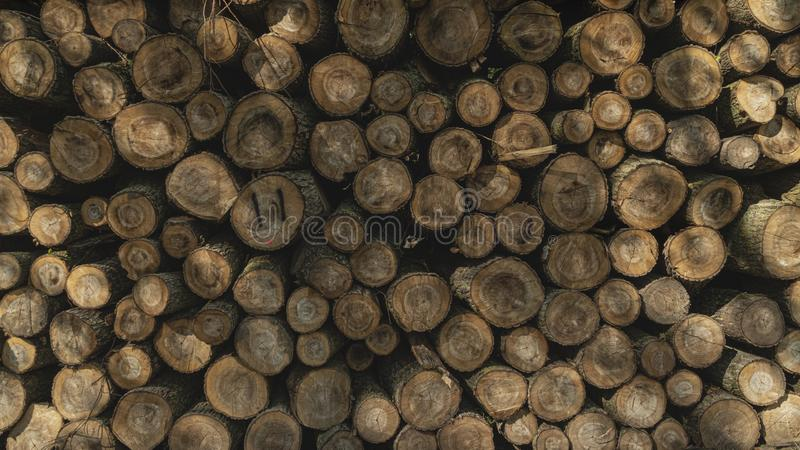 Bois de construction abattu empilé  Exploitation de sylviculture d'arbre photo stock