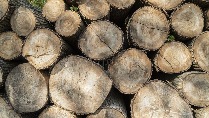 Bois de construction abattu empilé  Exploitation de sylviculture d'arbre photographie stock libre de droits