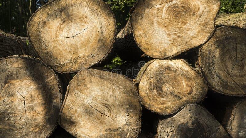 Bois de construction abattu empilé  Exploitation de sylviculture d'arbre image stock