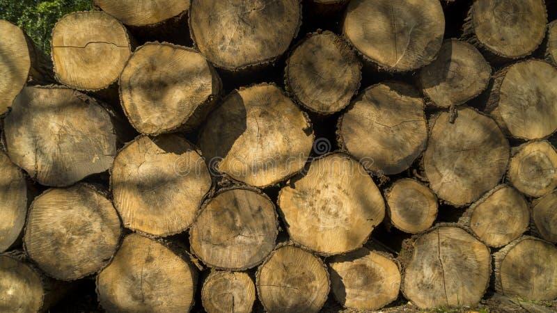 Bois de construction abattu empilé  Exploitation de sylviculture d'arbre photos libres de droits