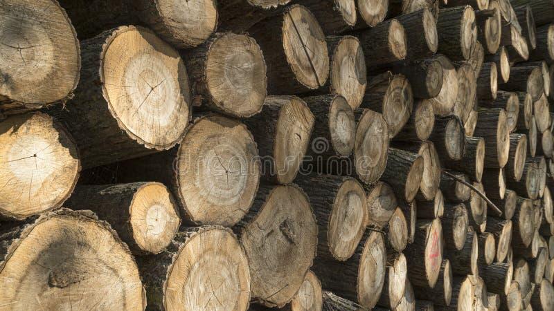 Bois de construction abattu empilé  Exploitation de sylviculture d'arbre photos stock