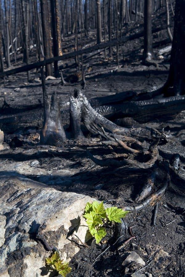 Bois de construction brûlé photo libre de droits