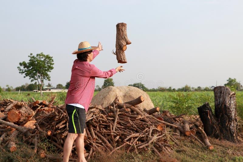 Bois de construction de lancement d'agriculteur d'homme en pile de bois de chauffage à la ferme et à utiliser de canne à sucre photographie stock