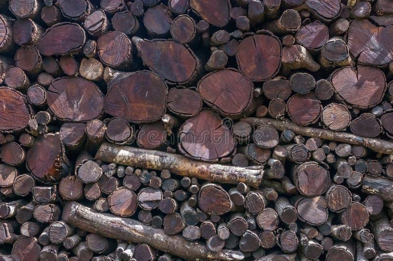 Bois de construction nouvellement abattu Pile de bois photos stock