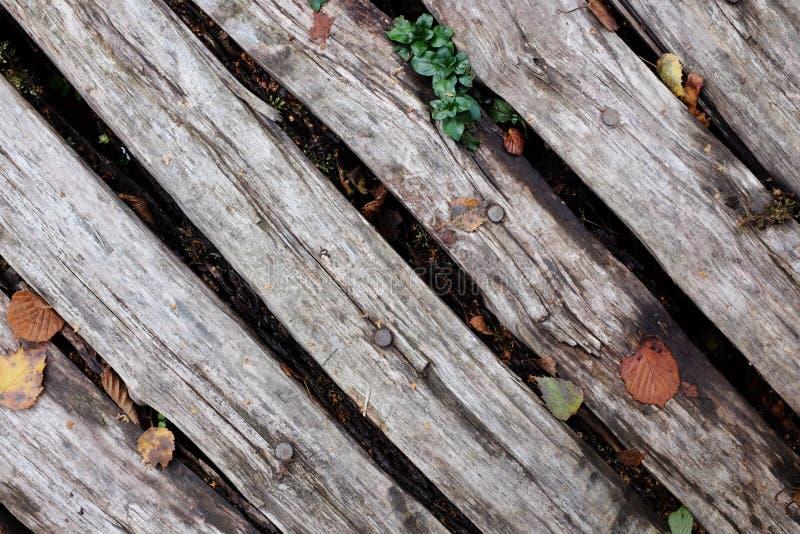 Bois de construction rugueux diagonal avec des feuilles de chute images libres de droits