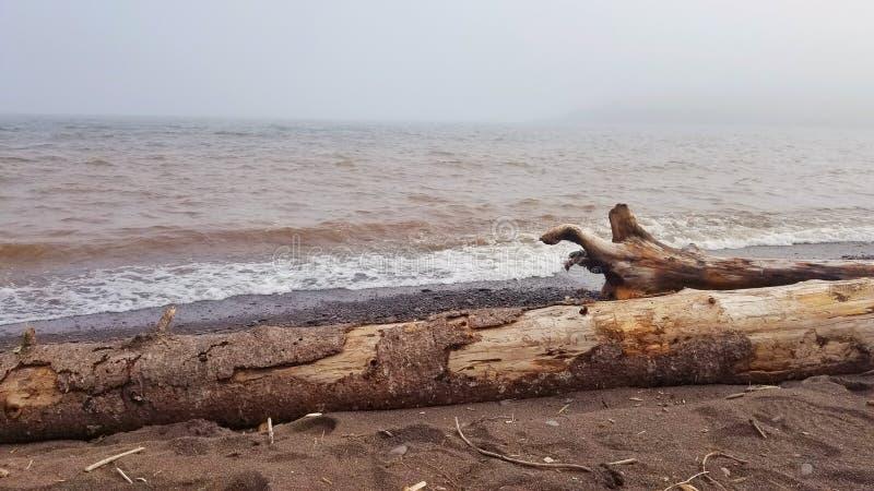 Bois de dérive du lac Supérieur photo libre de droits