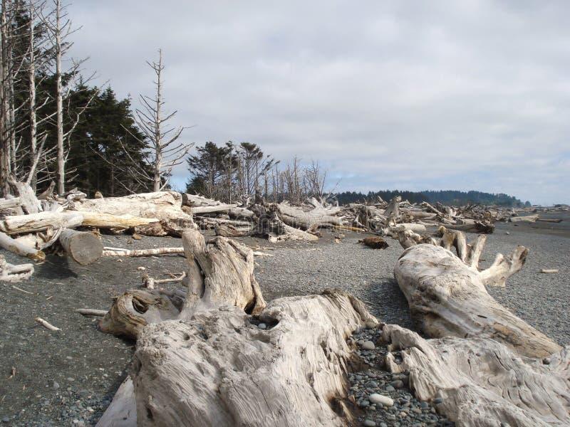 Bois de flottage à la première plage photographie stock libre de droits
