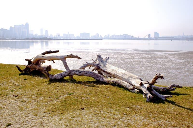 Bois de flottage avec l'horizon de ville de Durban images libres de droits