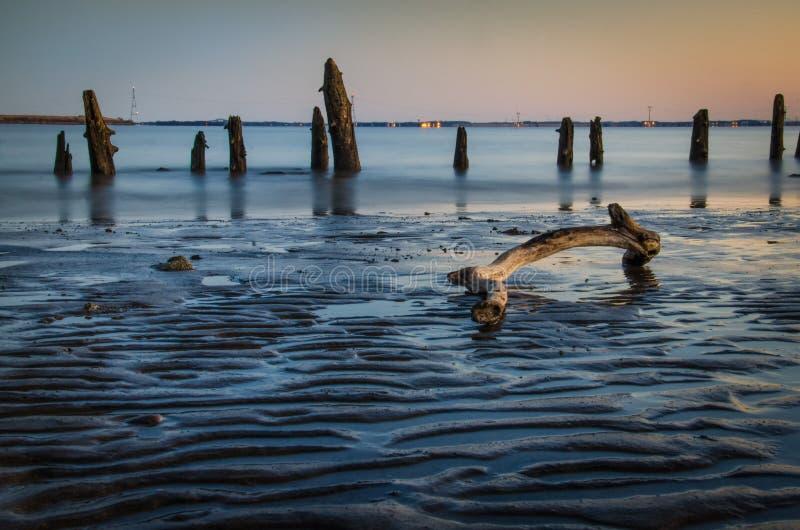 Bois de flottage et bancs de sable photo stock
