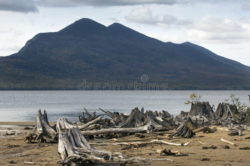 Bois de flottage sur la plage du lac flagstaff avec les montagnes de Bigelow images libres de droits