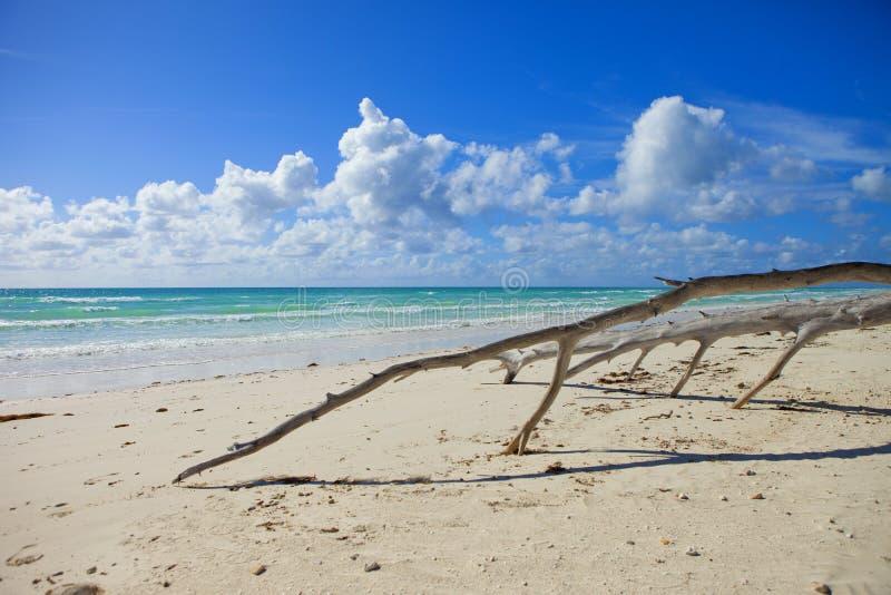 Bois de flottage sur la plage en Bahamas images libres de droits