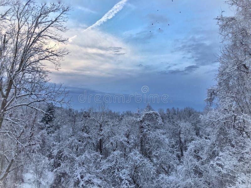Bois de Milou de la Pennsylvanie photographie stock