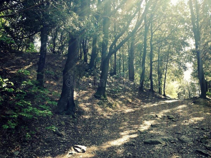 Bois de MonteCeceri, Italie, Fiesole, Florence photo stock