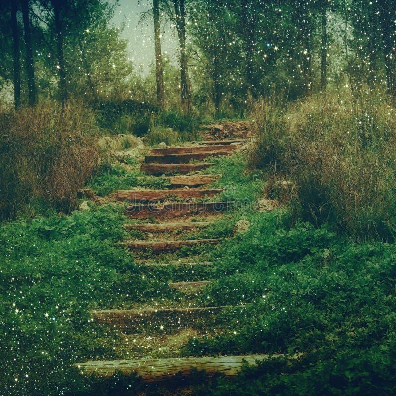 Bois de mystère rêveur et lumières féeriques de bokeh de scintillement brouillés par résumé image filtrée et texturisé photographie stock
