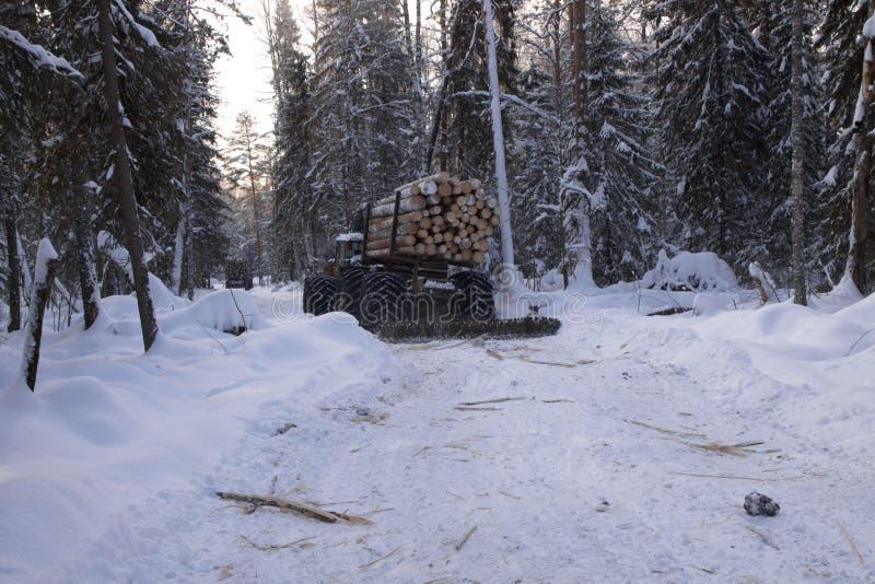 Bois de notation dans le pin de paysage de forêt d'hiver images libres de droits