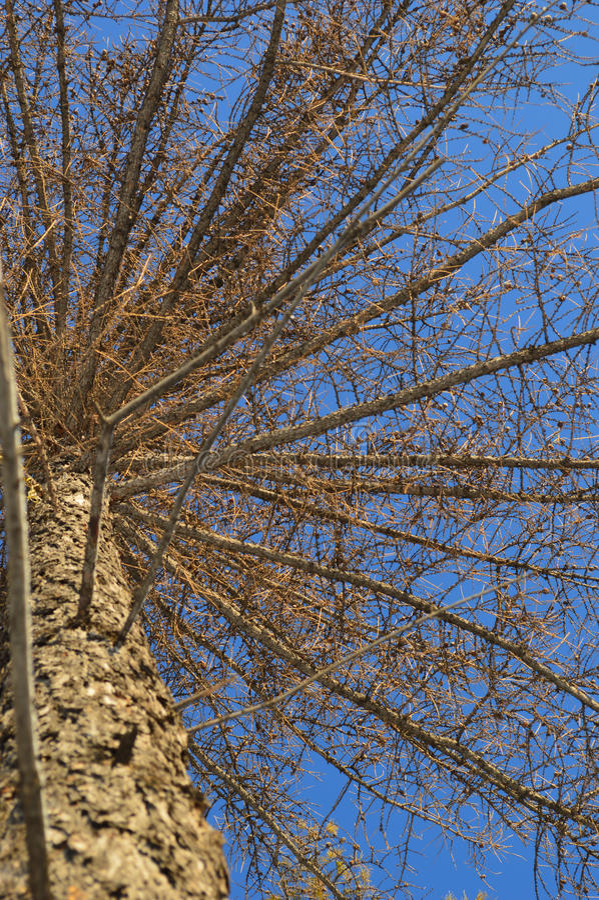 Bois de pin photographie stock libre de droits