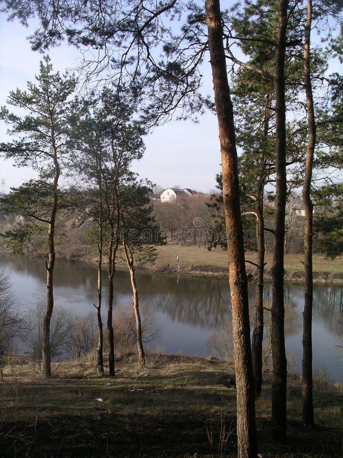 Bois de source photo stock