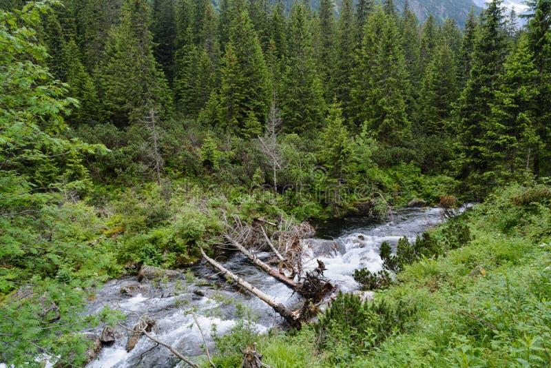 Bois de Tatra photographie stock
