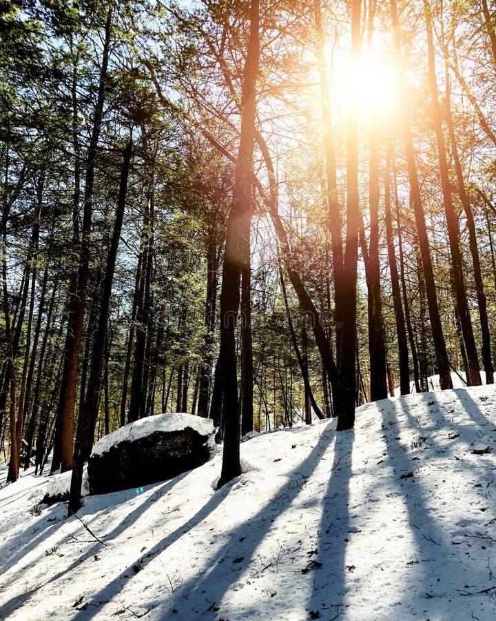 Bois de traînée de Mohawk photo libre de droits