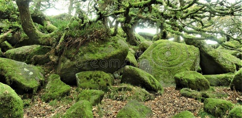 Bois de Wistmans en Devon - la pierre du druide ? photos libres de droits