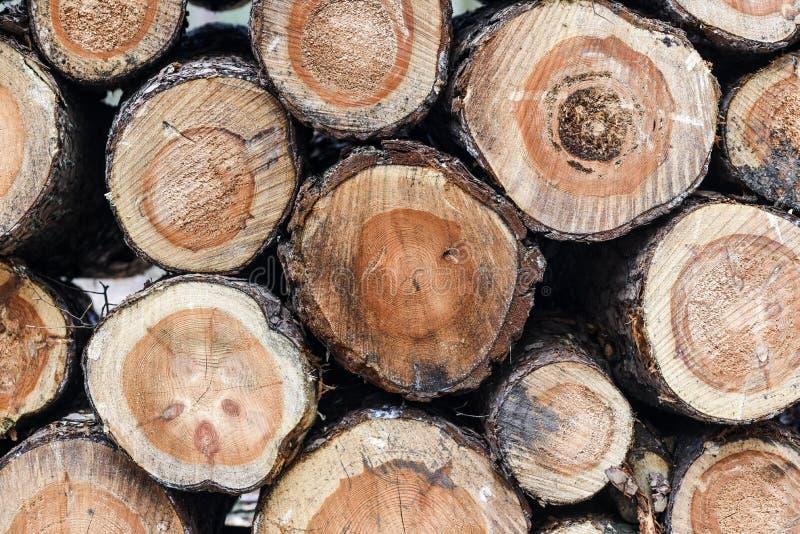 Bois empilé dans la forêt images libres de droits