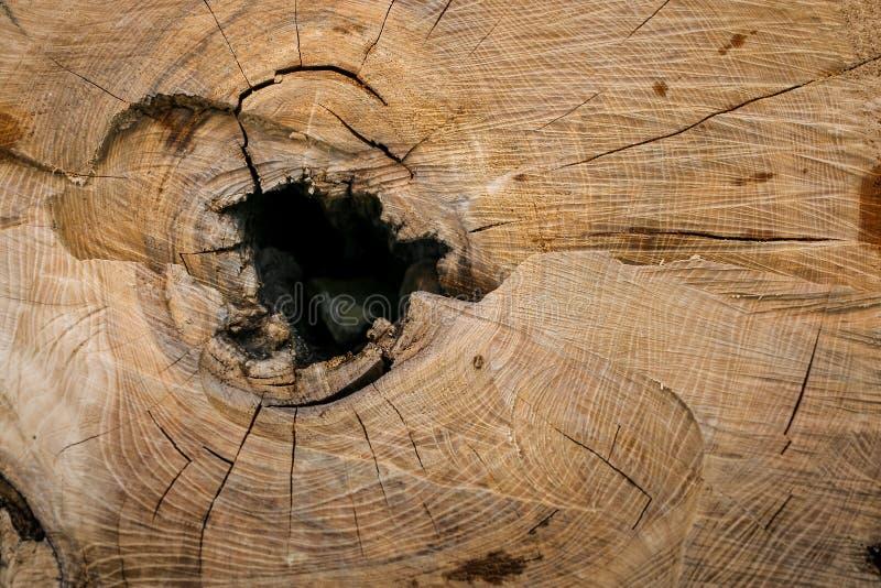 Bois en gros plan de coupe transversale avec les anneaux annuels, les fissures et le trou au centre image libre de droits