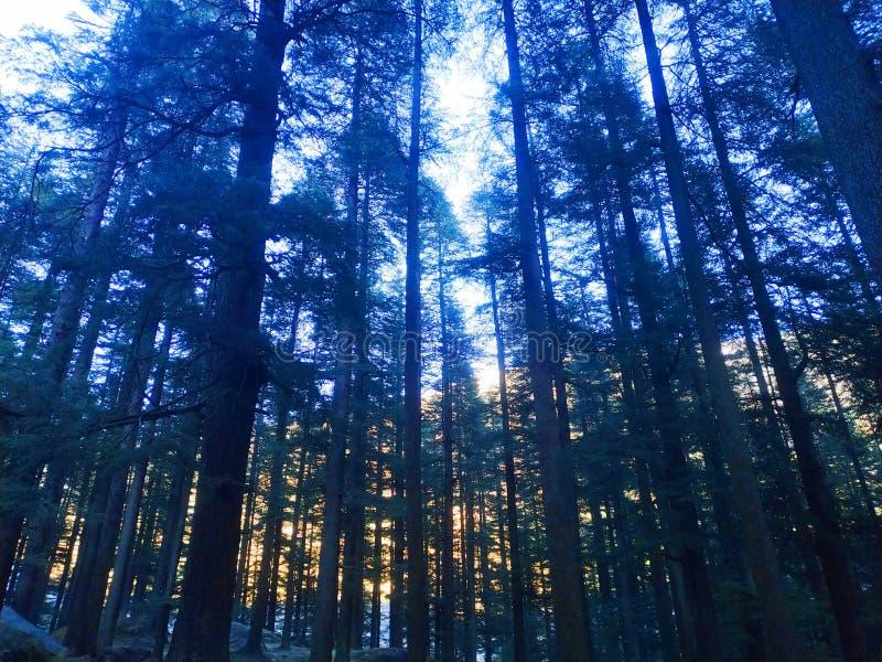 Bois en Himalaya images libres de droits