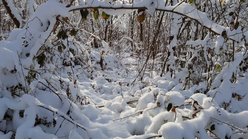 Bois en hiver photo libre de droits