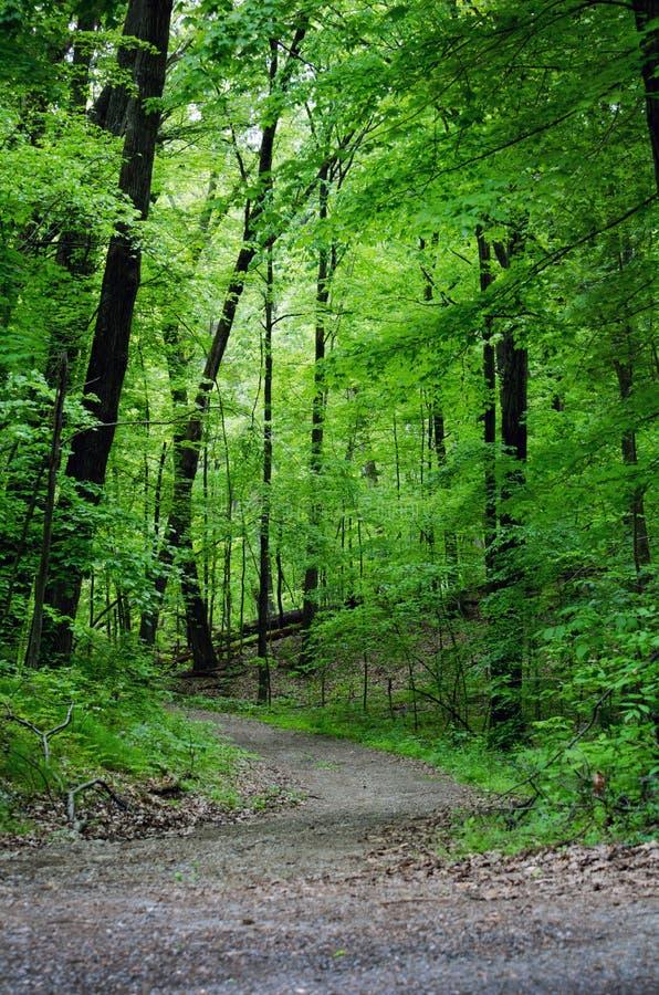 bois et chemin ombreux photo stock