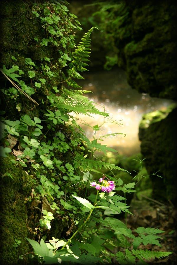Bois féeriques de forêt humide d'imagination photo libre de droits
