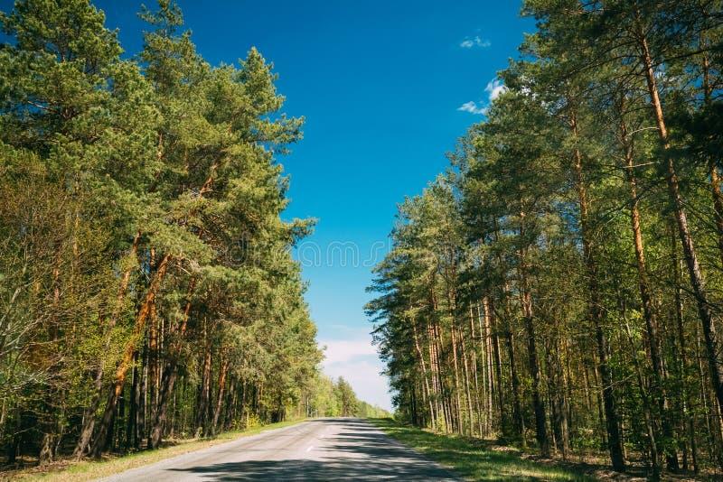 Bois Forest In Sunny Day d'Asphalt Road Through Spring Trees Été image libre de droits