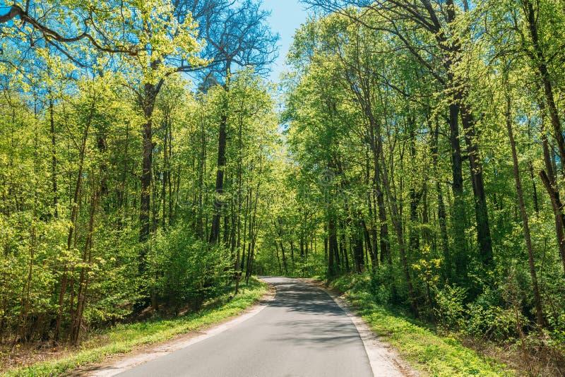 Bois Forest In Sunny Day d'Asphalt Road Through Spring Trees Jour ensoleillé photographie stock