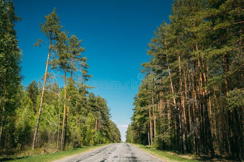 Bois Forest In Sunny Day d'Asphalt Road Through Spring Trees Sun image stock