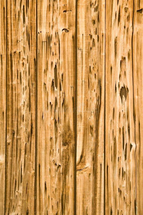 Bois mangé par termite photos stock