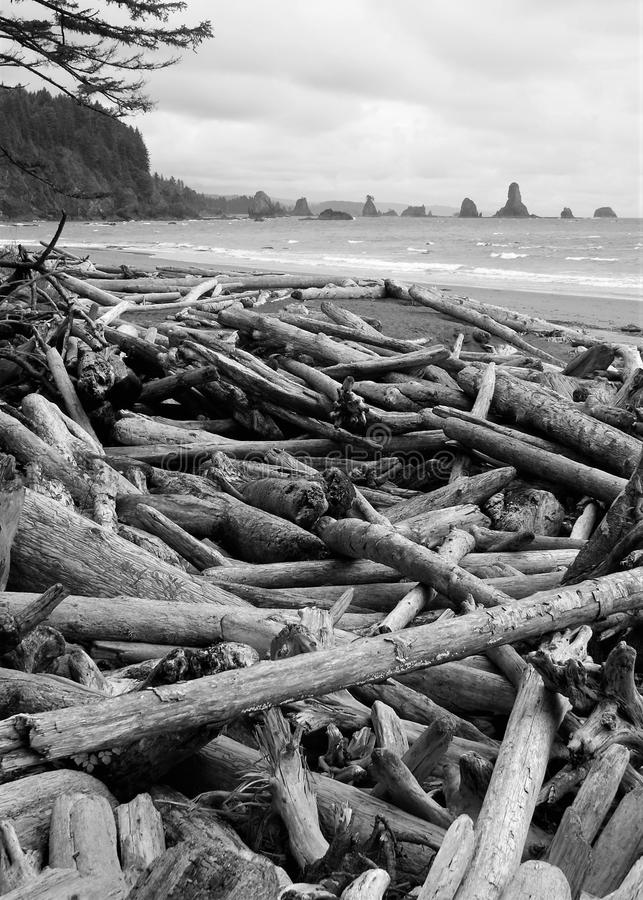 Bois mort déposé sur la côte photo stock