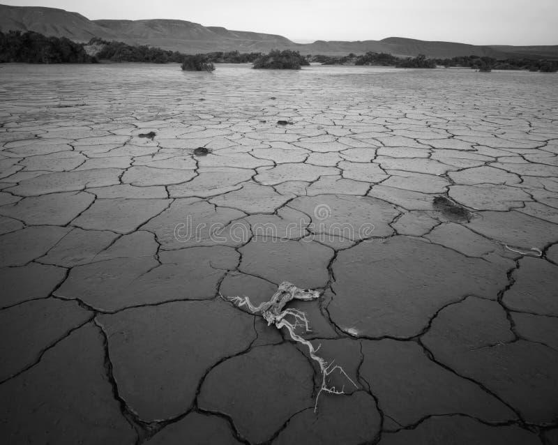 Bois mort Orégon occidental images libres de droits