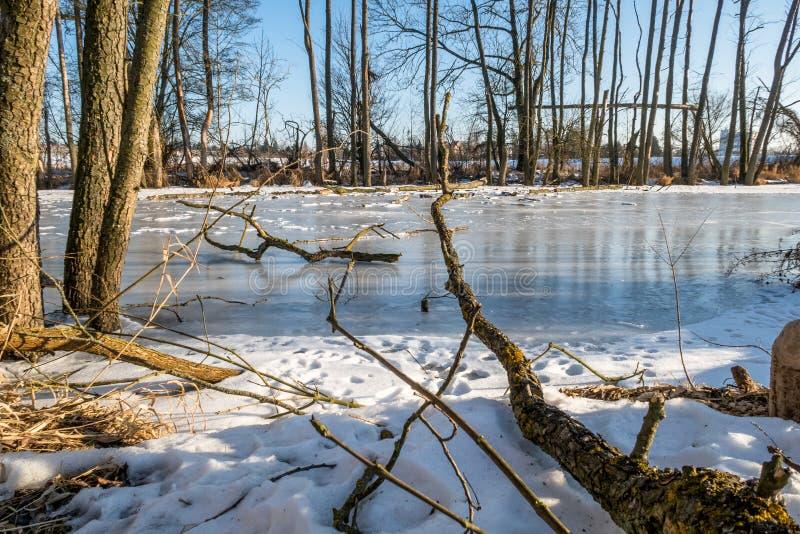 Bois mort sur une petite rivière congelée image libre de droits