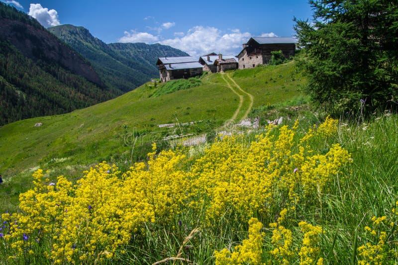 Bois noir ceillac queyras in Hautes-Alpes in Frankrijk royalty-vrije stock foto