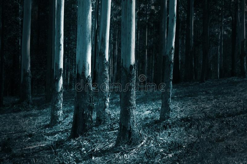 Bois noir et blanc abstrait avec un groupe d'arbres images libres de droits