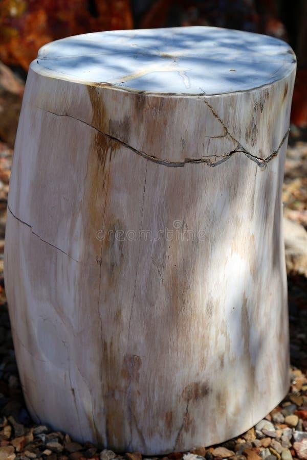 Bois pétrifié photographie stock libre de droits