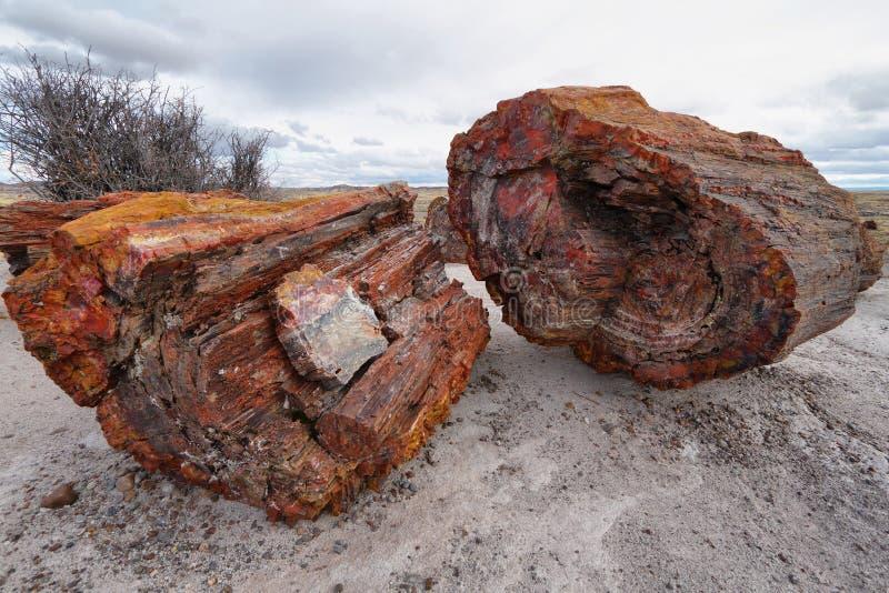 Bois pétrifié de la période triassique dans la forêt pétrifiée photographie stock libre de droits