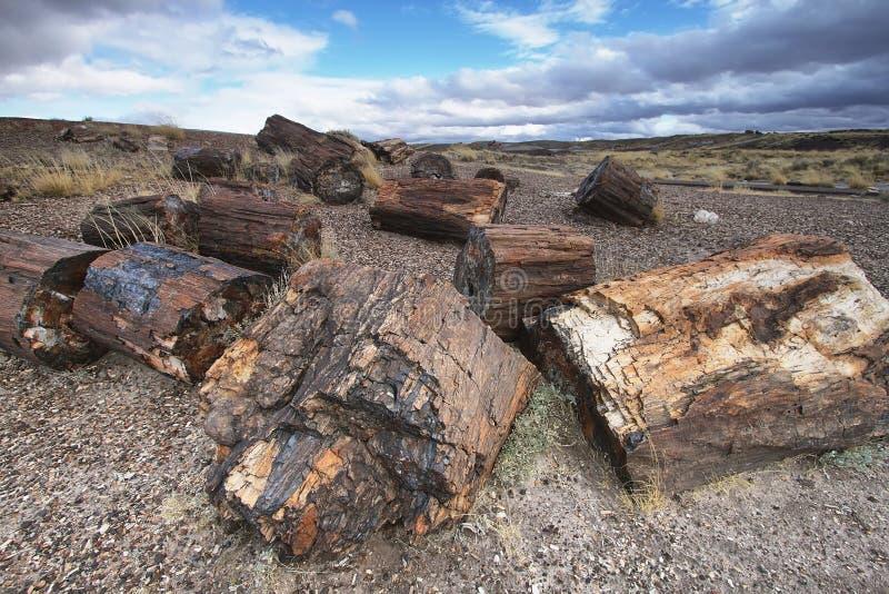 Bois pétrifié de la période triassique dans la forêt pétrifiée photo stock
